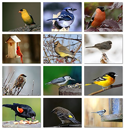 - Song Bird Greeting Cards With Identification Card - 12 Different Birds - Blank on the Inside - 5.5
