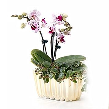 Better Way Epoxidharz Beschichtet Rund Keramik Blume Orchidee