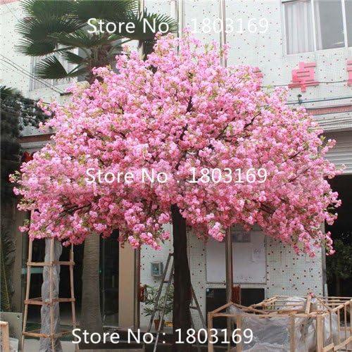 10 PC fuente llanto del cerezo, jardín de DIY árbol enano, semillas de árboles bonsai sakura ornamental de plantas para el hogar: Amazon.es: Jardín