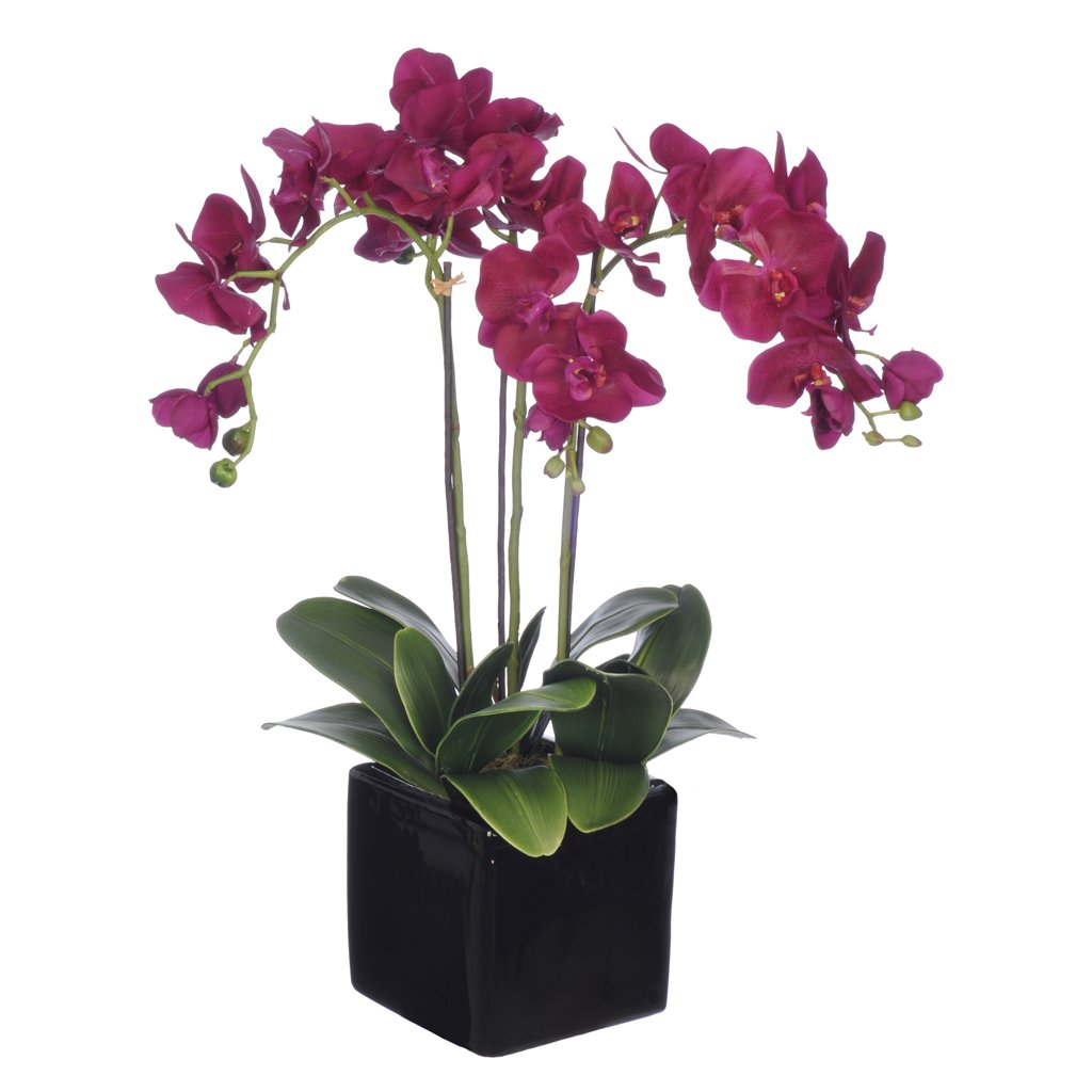 Amazon house of silk flowers artificial triple stem amazon house of silk flowers artificial triple stem phalaenopsis orchid arrangement lime green home kitchen reviewsmspy