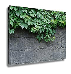 Ashley Canvas, Green Leaves Of Ivy Virginia Creeper On Bare Boards Of A Wooden Fence, 24x30