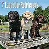 2017 Monthly Wall Calendar - Labrador Retrievers