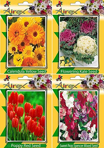 Sweet Pea Red Designs (Bloomgreen Co. Bloom Green Co. Calendula Yellow, Flowering Kale, Poppy Red and Sweet Peas Spencer Mixed Flower Seeds (Pack of 50 Seeds 4 Per Packet) + Get 1 Flower Seeds Free)