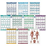 10 Pack - Exercise Workout Poster Set - Dumbbell, Suspension, Kettlebell, Resistance Bands, Stretching, Bodyweight, Barbell, Yoga Poses, Stability Ball, Muscular System Chart (LAMINATED, 18' x 27')
