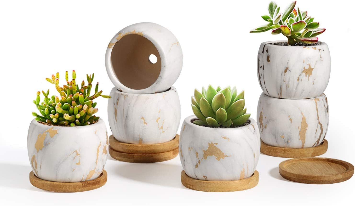 T4U Ceramic Succulent Pots 2.5 Inch Round Marbleize Set of 6 with Trays, White and Gold Modern Small Succulent Planter with Drainage, Porcelain Herbs Cactus Container for Home and Office Decor