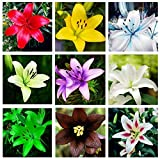 Go Garden Rare Lily Potted Not Lily Bulbs It is Bonsai Lilum Flower Outdoor Perennial Pleasant Fragrance Plant for Home & Garden 300 Pcs: Mixed