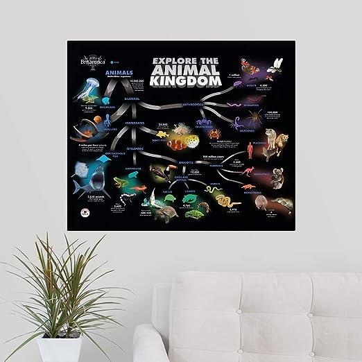 CANVAS ON DEMAND Animal Kingdom Educational Poster Wall Peel Art Print, 30