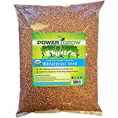 Certified Organic Non-GMO Wheatgrass Seeds - Guaranteed to Grow