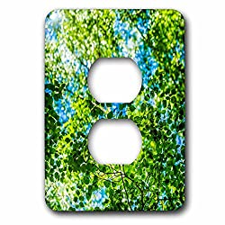 3dRose Alexis Photography - Seasons Summer - Sunlit carpet of linden tree foliage - Light Switch Covers - 2 plug outlet cover (lsp_265612_6)