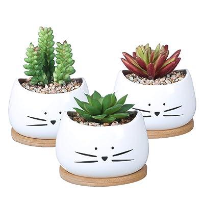 Koolkatkoo 3.2 Inch Cute Cat Ceramic Succulent Planter Pots with Removable Saucer Unique Cactus Planters Porcelain Decorative Flower Pot for Cat Lovers Set of 3 White : Garden & Outdoor