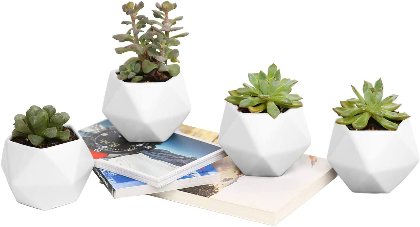 Plant Pot, Rosoli 4pcs Ceramics Indoor Planter Garden Pots for Succulents, African Violets, Cactus, Herbs – 3.5 Inch Flower Pots with Drainage Hole and Waterproof Tray White .