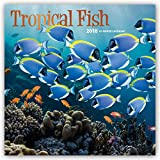 Tropical Fish 2018 12 x 12 Inch Monthly Square Wall Calendar with Foil Stamped Cover, Animals Marine Wildlife Fish (Multilingual Edition)