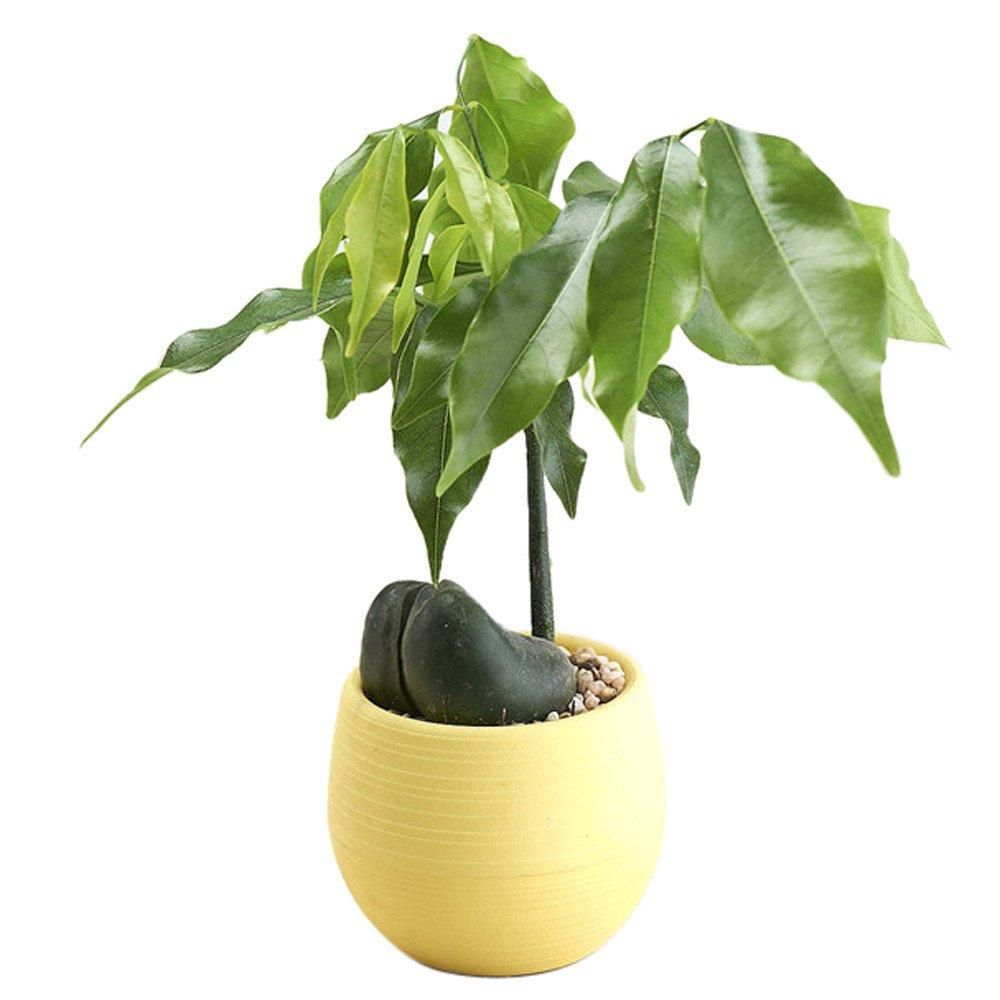 Iusun Mini Round Plant Flower Planter for Succulent Plants Air Plants Cacti Artificial Plants Storage Organizer Patio Home Office Garden Yard Rectangle Indoor/Outdoor Decor Hot (Yellow)