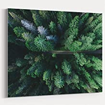 Westlake Art - Vegetation Tree - 16x20 Canvas Print Wall Art - Canvas Stretched Gallery Wrap Modern Picture Photography Artwork - Ready to Hang 16x20 Inch (32AD-7106B)