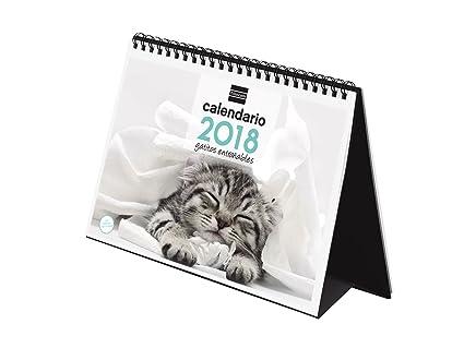 Finocam Imágenes - Calendario de sobremesa 2018, diseño gatitos, español, 210 x 150