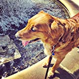 Home Comforts LAMINATED POSTER Water Fountain Dog Golden Retriever Poster Print 24x16 Adhesive Decal