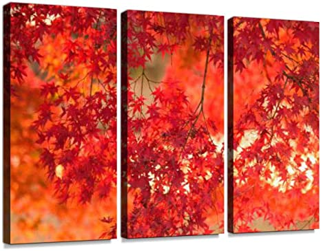 Amazon Com Vibrant Japanese Autumn Maple Leaves Landscape With Blurred Background Print On Canvas Wall Artwork Modern Photography Home Decor Unique Pattern Stretched And Framed 3 Piece No Frame Posters Prints
