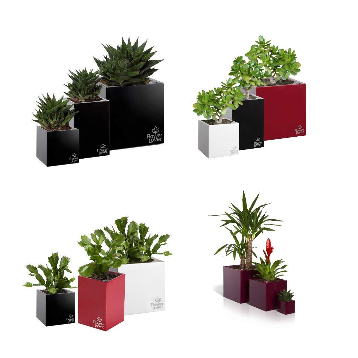 myBoxshop - Macetas para Plantas suculentas, Juego de 3 ...