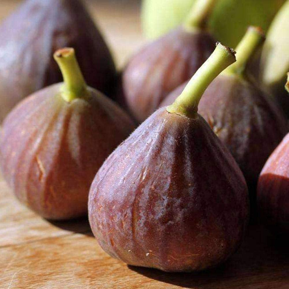 100pcs Fig Seeds Fig Tree Seeds Edible Fig Plant Fig Tropical Seeds Rare Fruit Seed Home Planting