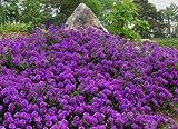 Best Flowers - 400+ BULK PERENNIAL FLOWER GARDEN + GROUNDCOVER SEEDS Review
