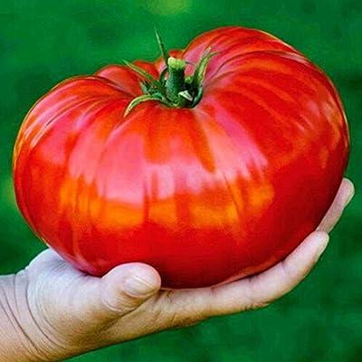 YENJO Seeds-Home Gardening Vegetable Plant Fresh Big Tomato Seeds : Garden & Outdoor