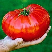MURIEO jardín- Semillas de tomate orgánico Tomates gigantes