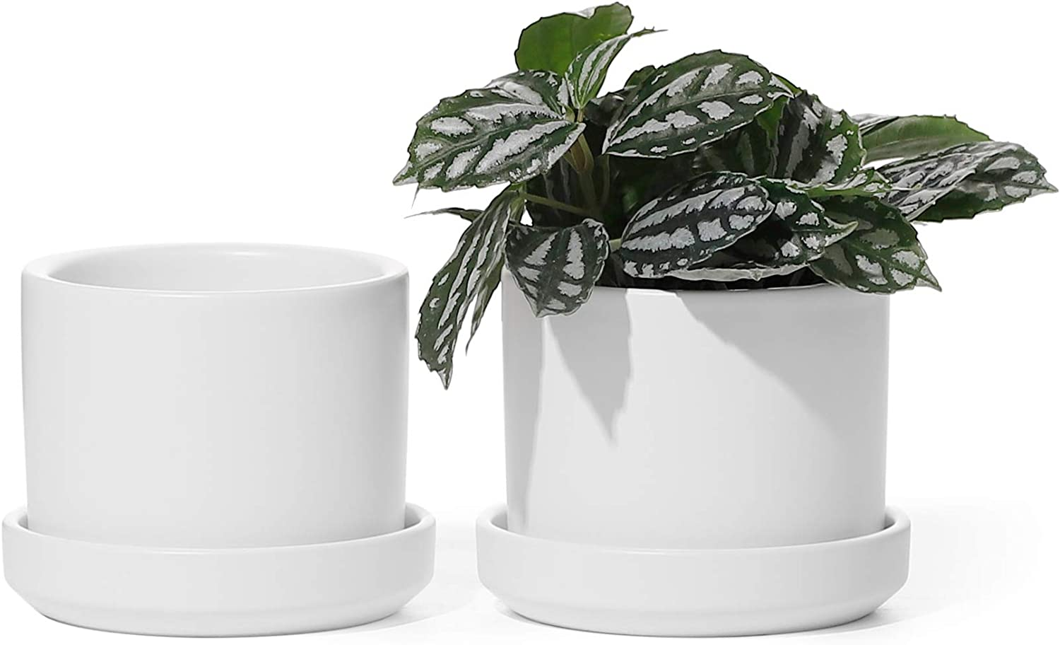 Succulent Planters - POTEY 800 3.5 Inch Small Cylinder Ceramic Plant Pots with Watering Drain Holes and Trays for Flowers, Succulents, Orchid, Snake Plant, Modern Home Decor - White, Set of 2
