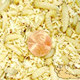 250ct Live Waxworms, Pet Food, Fishing