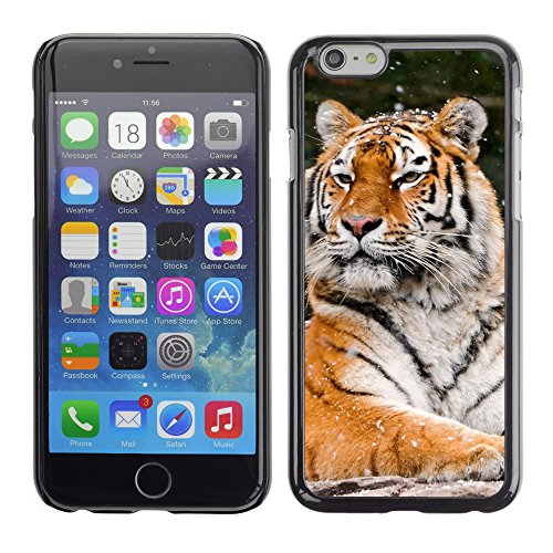 Premio Sottile Slim Cassa Custodia Case Cover Shell // V00003936 tiger hiver neigeux // Apple iPhone 6 6S 6G PLUS 5.5""