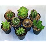 "Instant Cactus/Succulent Collection - 8 Plants 2"" pots"