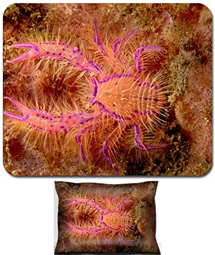 - Liili Mouse Wrist Rest and Small Mousepad Set, 2pc Wrist Support IMAGE ID: 1943509 A very small squat lobster crawls out from within its sponge living quarters