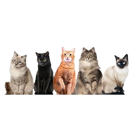 CATALOG CLASSICS Cat House Window/Door Decal Clings - 5 Sitting Kitties  sc 1 st  Amazon.com & Amazon.com: CATALOG CLASSICS Cat House Window/Door Decal Clings - 5 ...
