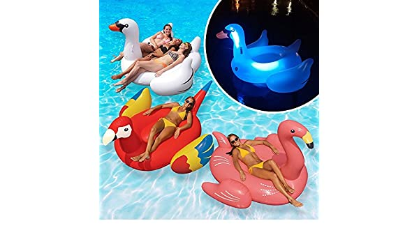Amazon.com: Swimline Animal Kingdom Extra Large Swimming Pool Floats Combo Value Pack: Light-up Swan, Swan, Flamingo, Parrot: Toys & Games