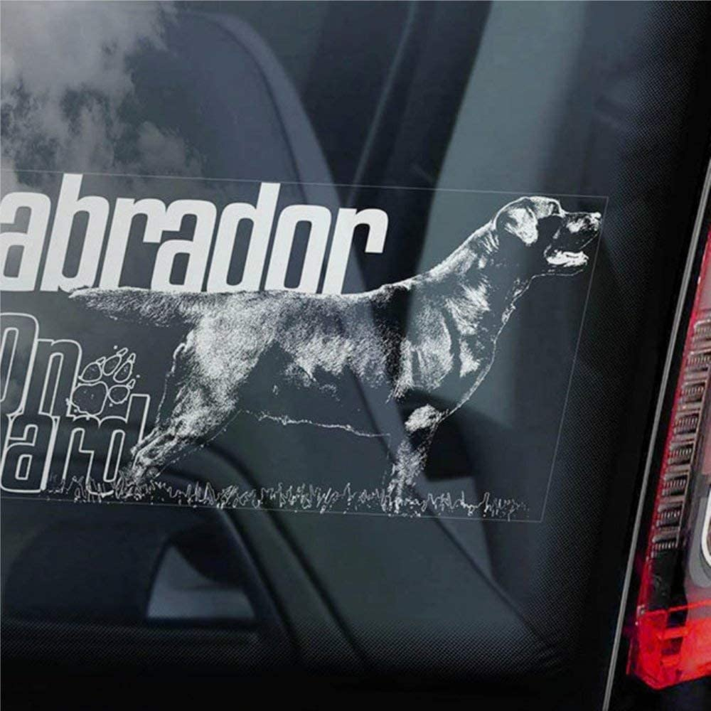 DONL9BAUER Labrador Cars Vinyl Decal Sticker,'If You Don't own a Lab, You just Have a Dog!' Auto Decals, Decal Sticker for Trucks, Vans, Motorcycle, Window, Laptop, Computer, Cup, Mug, Bottle, Bumpe.