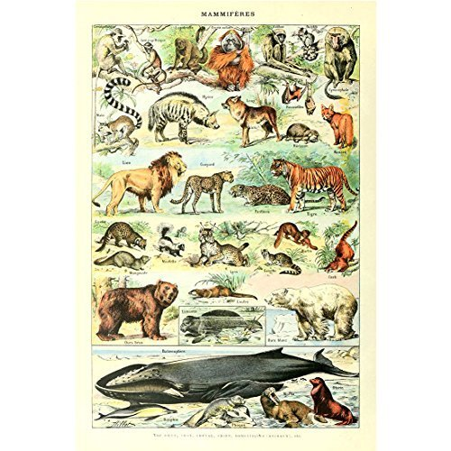 Retro Vintage Poster Print Art Wild Animals Identification Reference Educational Chart Wall Decor (20.87'' x - Art Animal Vintage Poster