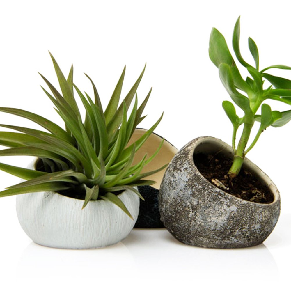 Chive - Koski, Small Round Ceramic Air Plant Container, Succulent and Cactus Mini Pot, Tillandsia/Bromeliad Display, Airplant Holder for Indoor Garden and Home Decor, Set of 3 (White, Brown, Black)
