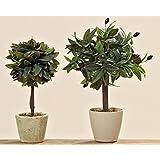 Boltze Olivenbaum, 40 cm, grün