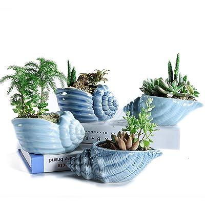 Sun-E 5.5 Inch Blue Conch Ocean Series Ceramic Base Serial Set Succulent Plant Pot Cactus Plant Pot Flower Pot Container Planter with Drainage Hole Idea 4 in Set : Garden & Outdoor