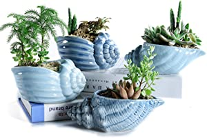 SUN-E 5.5 Inch Blue Conch Ocean Series Ceramic Base Serial Set Succulent Plant Pot Cactus Plant Pot Flower Pot Container Planter with Drainage Hole Idea 4 in Set