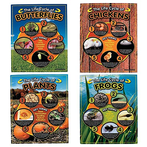 4 Pc Life Cycles Learning Chart Set -