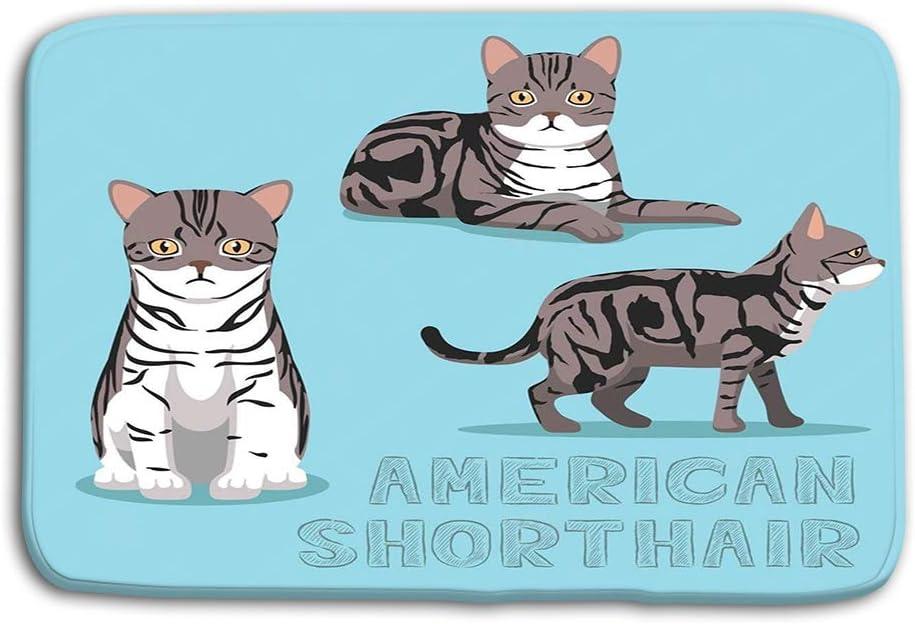 vbndgfhjd Doormat Indoor Outdoor Cat American Shorthair Cat ...