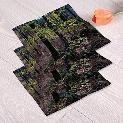 C COABALLA Forest Quick Dry Towels,Natural Scenery Trees Autumn Season in Woods Wilderness Rural Growth Eco Photo for Bathing Spa Center,Double Sided Printing:Hand Towel Set of 3