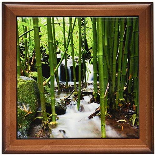3dRose ft_89187_1 Flora, Bamboo forest waterfall, Haleakala NP, Maui - US10 JGS0016 - Jim Goldstein - Framed Tile, 8 by 8-Inch -