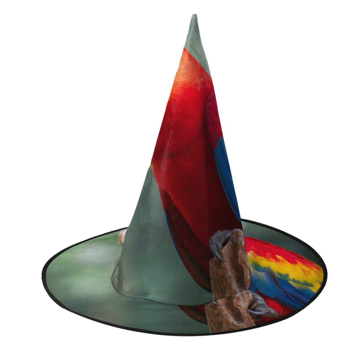 buy best pretty cool recognized brands Amazon.com: Colourful Parrot Halloween Hat Soft Witch Hats ...