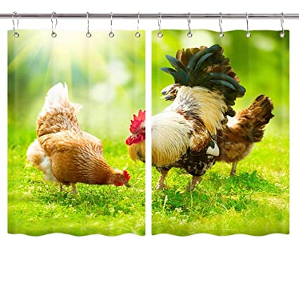Amazon.com: NYMB Traditional American Farm Animal Rooster ...