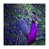 Peacock Flaunting -DIY 5D Diamond Painting by Number Kits - Paint with Diamonds Cross Stitch - Embroidery Crystal Rhinestone Pasted Drilled Arts Craft for Home