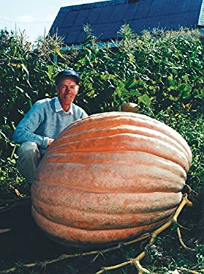 Dill's Atlantic Giant Pumpkin Seeds ? Monster Pumpkin!!! ? Can Grow to 1600 lbs.