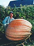 buy Dill's Atlantic Giant Pumpkin Seeds ★ Monster Pumpkin!!! ★ Can Grow to 1600 lbs. now, new 2020-2019 bestseller, review and Photo, best price $1.80