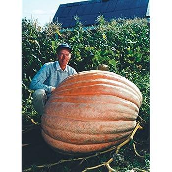 Dill's Atlantic Giant Pumpkin Seeds ★ Monster Pumpkin!!! ★ Can Grow to 1600 lbs.