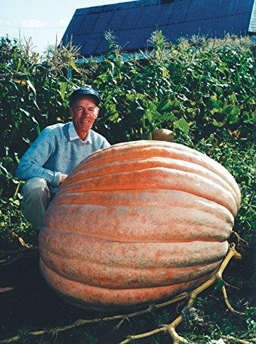 dills-atlantic-giant-pumpkin-seeds-monster-pumpkin-can-grow-to-1600-lbs